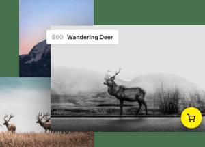 Photos of wandering deer for $60